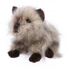 Dior - Cairn terrier