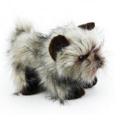 Dior - Cairn terrier