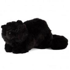 Coal - fekete macska
